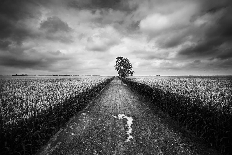 Fotographie eines Baumes auf einer Straße.