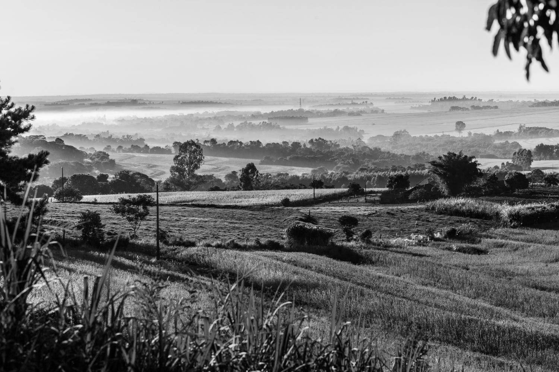 Blick über mehrere Sojafelder.