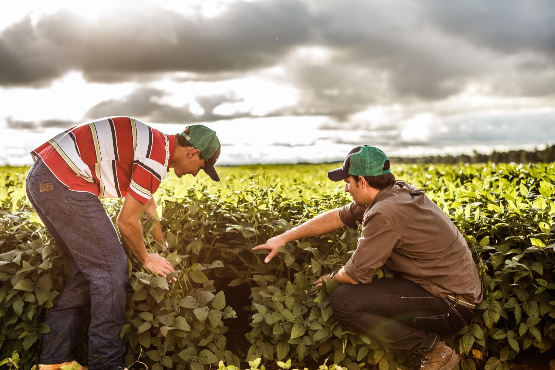 fotografie von zwei sojabohnen farmern die ihre pflanzen begutachten.